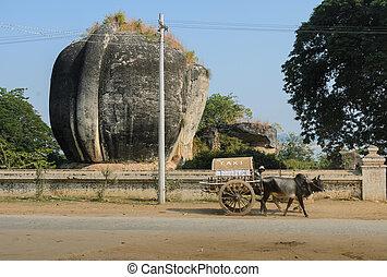 Mingun cow Taxi, Myanmar - Mingun cow Taxi infront of Lion...