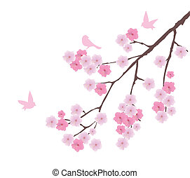 Cherry - vector cherry blossom with birds