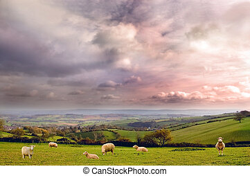 Rural Landscape - A rural landscape in Somerset, UK. Set in...