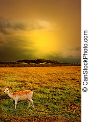 sunset over rural landscape - A deer in the sunset with...