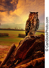 Owl and landscape
