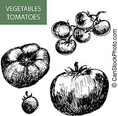 Tomatoes Set of hand drawn illustrations