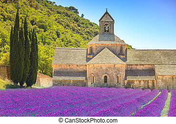 Abbey of Senanque and blooming rows lavender flowers Gordes,...