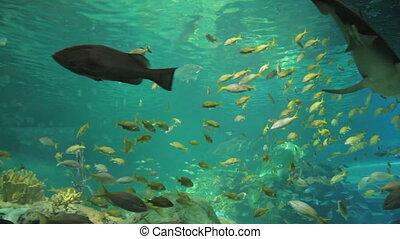 Aquarium with shark