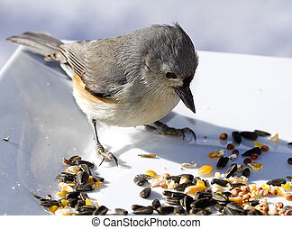 Titmouse Eating Birdseed - Small titmouse bird eating...