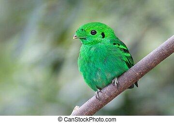bird - green bird
