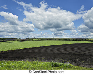 Planted Field  - Landscape with Field And Beautiful Sky
