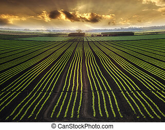 Planted Field - Landscape with Field And Beautiful Sky At...