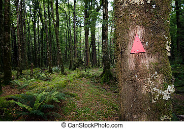 Fiordland - New Zealand - Mark Trail in a rain forest in...