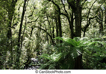 Fiordland - New Zealand - Rain forest in Fiordland, New...