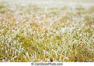 Winter background of frozen grass
