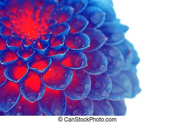 dark blue fire flower - abstract background dark blue fire...