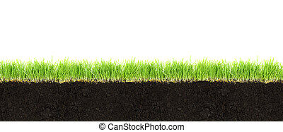 Cross-section of soil and grass isolated on white background...