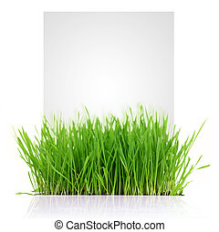 Fresh grass with copy-space isolated on white background