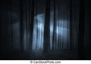 Spooky foggy forest at night or dusk with light beams