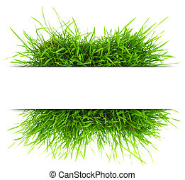 Natural banner with fresh grass isolated on white background