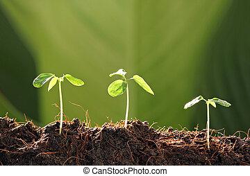 Three Seedlings in vegetable garden. - Three Seedlings in...