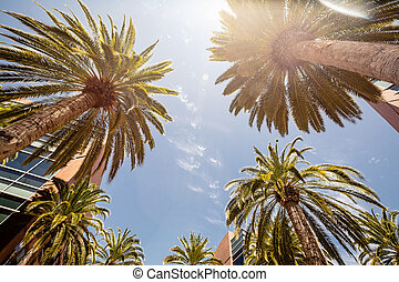 Silicon Valley, USA - Palms in Silicon Valley in California,...