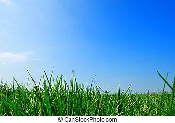 summer background  - fresh green grass summer background