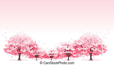 Line of cherry blossom tree background.File contains...