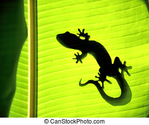 Nature Gecko - Gecko on a banana tree