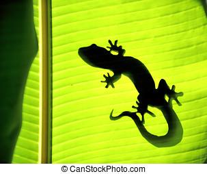 Nature Gecko - Gecko on a banana tree