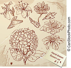 Set of Vintage Realistic graphic flowers - hand drawn images