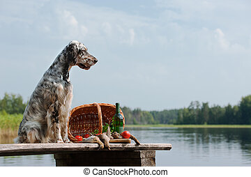 English setter with hunting birds