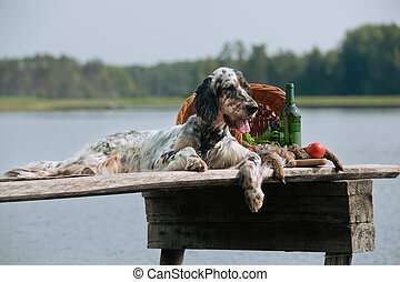 English setter with hunting birds - setter with hunting bird...
