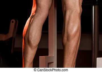 Sporty Legs Calf - Bodybuilders Legs Shot In A Gym In...