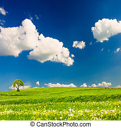Green meadows with one tree over blue sky