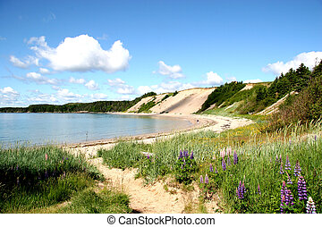 Sandy Beach in Rural Newfoundland - Sandy Cove Beach in...