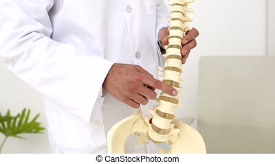 Chiropractor showing spine model to camera in an office at...