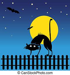 Wild black silhouette cat