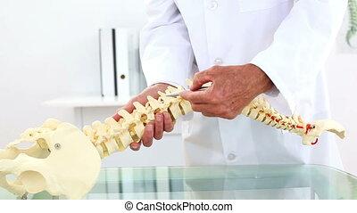 Doctor explaining skeleton model using pen to point in his...