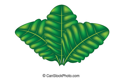 Three leaf - green, leaf, vector, illustration, three