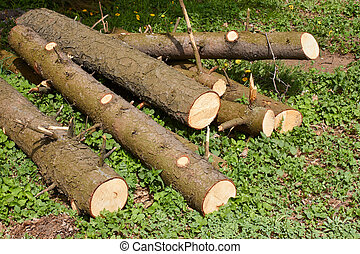 Pile of pine logs on green grass