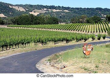 Sonoma vinyard with chicken - vineyard in sonoma