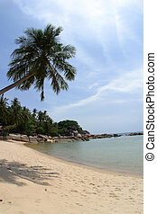 A Palm Tree Bends Over on a Perfect Beach in Koh Tao...