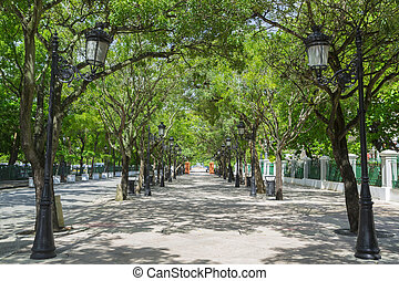 tree lined avenue - Tree lined avenue Paseo de la Princesa...
