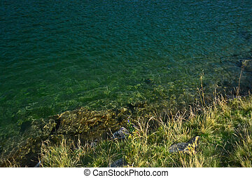 green grass and turquoise clear water - green grass on the...