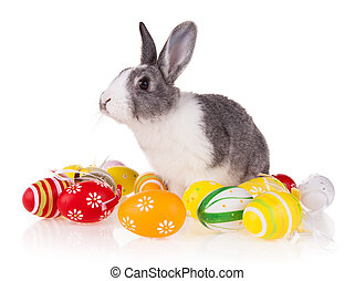 Rabbit with eggs on white background - Studio shot of...