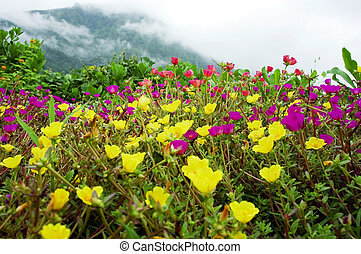 wildflowers - Vibrant field of wildflowers