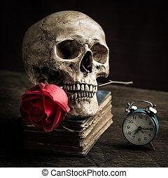 Still life skull - Still life with human skull with red rose...