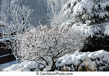 the winter-impression into the frosty day