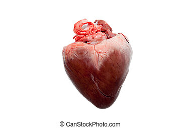 Raw animal heart - raw animal heart isolated on white...