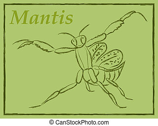 mantis - vector illustration of mantis