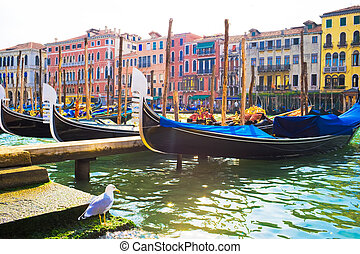 Gondolas in Venice - Nice view of anchored gondolas on Grand...