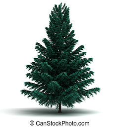 Single Spruce Pine Tree - Spruce Pine Tree (isolated white...
