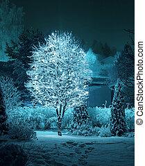 Illuminated tree in winter garden - Illuminated tree...